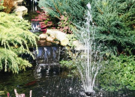 Come arredare il giardino con askoll for Laghetto giardino zanzare